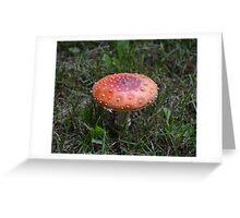 Amanita Muscaria (Fly Agaric Mushroom) Greeting Card