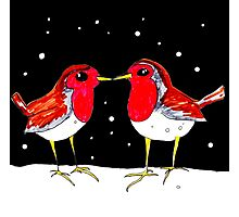 Kissing Robins Photographic Print
