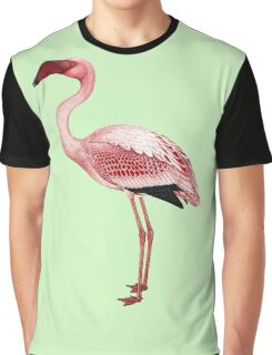 Pink Flamingo Isolated Graphic T-Shirt