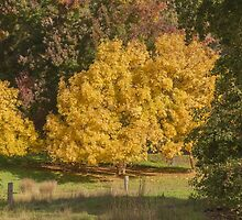 Golden Ash Trees by Elaine Teague