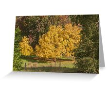 Golden Ash Trees Greeting Card