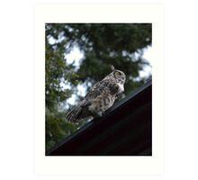 Great Horned Owl (Fairbanks, Alaska) Art Print