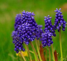Purple in macro by john forrant