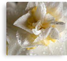 Rainy Day Daffodil Canvas Print