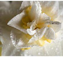 Rainy Day Daffodil Photographic Print