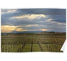 Stormy Vineyard Poster