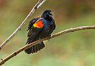 CALL OF THE BLACKBIRD by Sandy Stewart