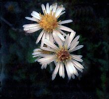Wild Daisies by Fay270
