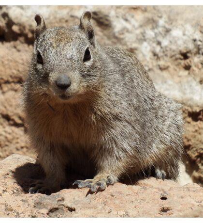 Squirrel Friends  Sticker