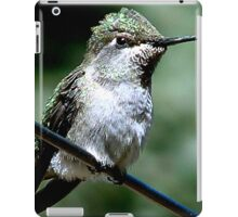 Female Ruby Throat Humming Bird at Rest iPad Case/Skin