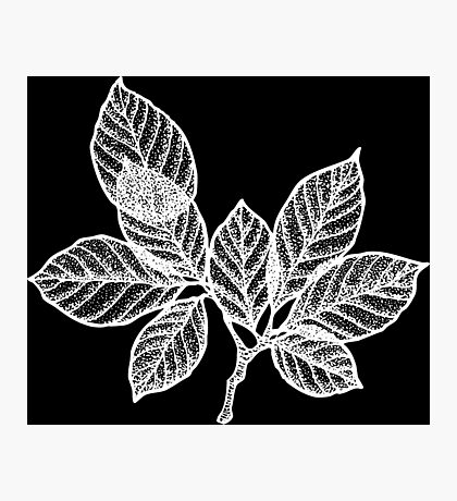 WHITE LEAVES Photographic Print