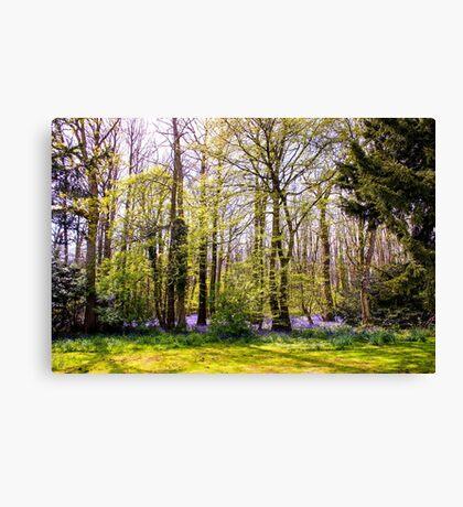 Woodland Wonderland Canvas Print