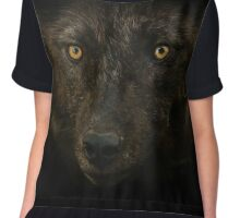 Midnights Gaze - Black Wolf Wild Animal Wildlife Chiffon Top