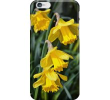 3 Daffodils on top of eachohter. iPhone Case/Skin