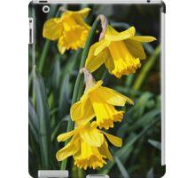 3 Daffodils on top of eachohter. iPad Case/Skin