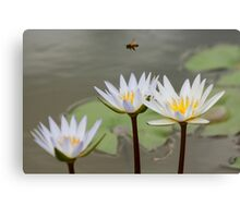 Bee Flying Over Water Lilies  Canvas Print