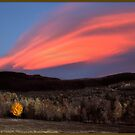 Maple Ablaze at Sunset by Wayne King