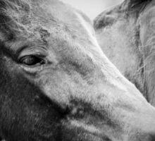 horse hugs Sticker