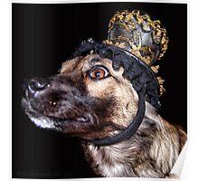 Mardi Gras Puppy 1 Poster