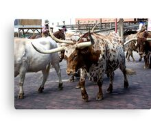 Cattle Drive 4 Canvas Print