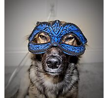 Masked Puppy Photographic Print
