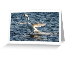 Swan Brakes Greeting Card