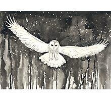 snowowl Photographic Print