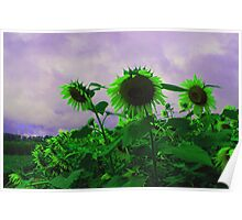 clemson sunflowers Poster