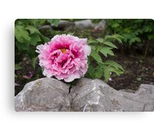 Peony on the Rocks - the Marvels of Spring Canvas Print