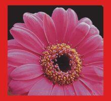 Stunning Pink Gerbera Daisy on Black Background Baby Tee