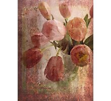 peach tulips Photographic Print
