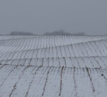 Winter Farm Fields - Rolling Hills on a Bleak Snowy Day Sticker