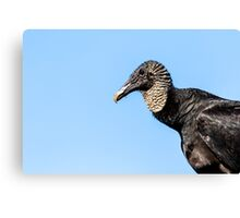 Black Vulture Canvas Print