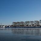 Seagull Convention on Thin Ice by Georgia Mizuleva