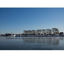 Seagull Convention on Thin Ice Photographic Print