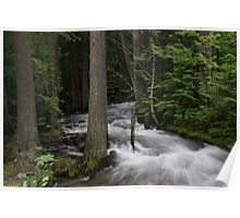 Rushing Water Through the Woods Poster