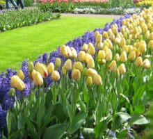 Tulips and Hyacinths - Keukenhof Gardens Sticker