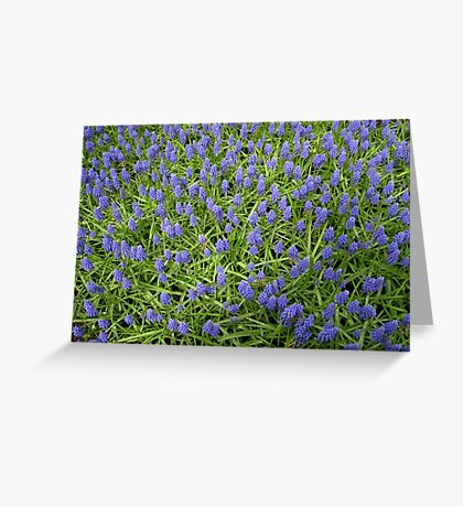 Blue Muscari - Keukenhof Gardens Greeting Card