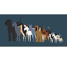 Sighthound Line Up Photographic Print
