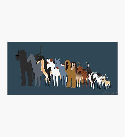 Sighthound Line Up Photographic Print