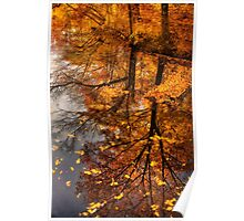 Fall Reflection  Poster