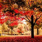 Red Maple in Larz Anderson park. by LudaNayvelt