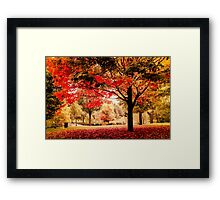 Red Maple in Larz Anderson park. Framed Print