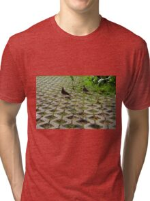 Pigeons on the pavement and grass in the park. Tri-blend T-Shirt