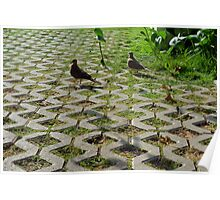 Pigeons on the pavement and grass in the park. Poster