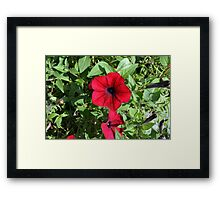 Red flowers and green leaves, natural background. Framed Print