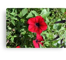 Red flowers and green leaves, natural background. Canvas Print