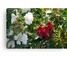 Red and white flowers in the park. Natural background. Canvas Print