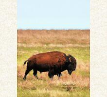 Teddy's Bull   /   WMWR 1907 - 2007 Pullover