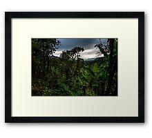 Tropical rainforest - jungle Framed Print